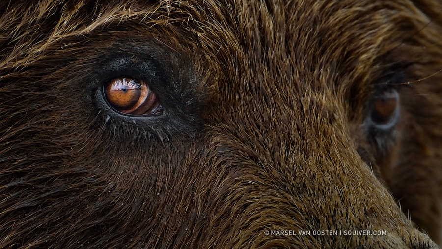 Photograph Eye To Eye by Marsel van Oosten on 500px