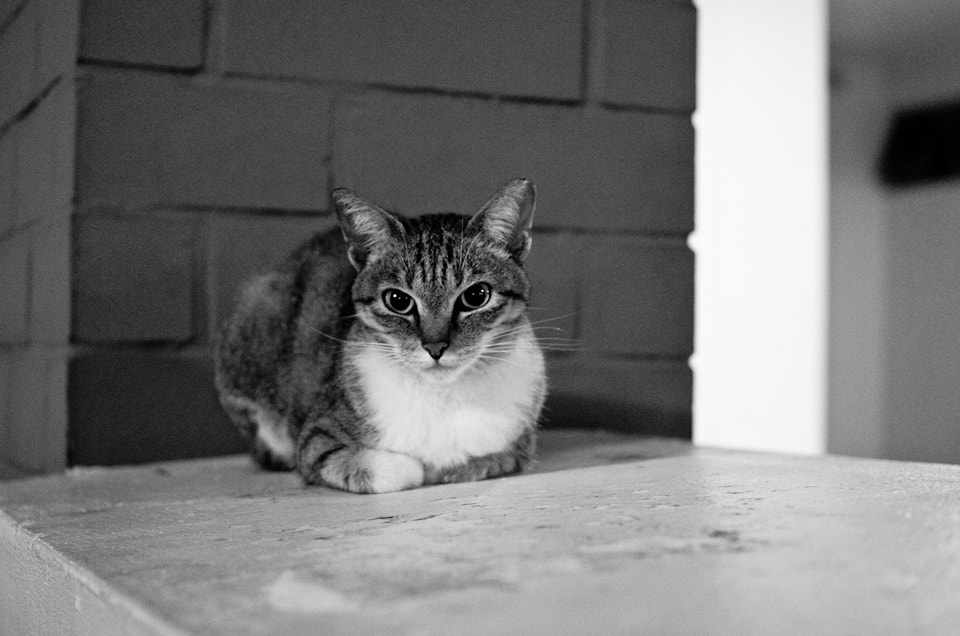 Photograph Cat #1 by Gabriel Choo on 500px