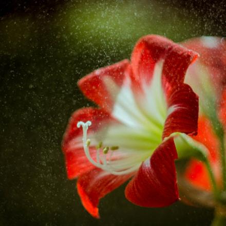 Magic Flower. :)