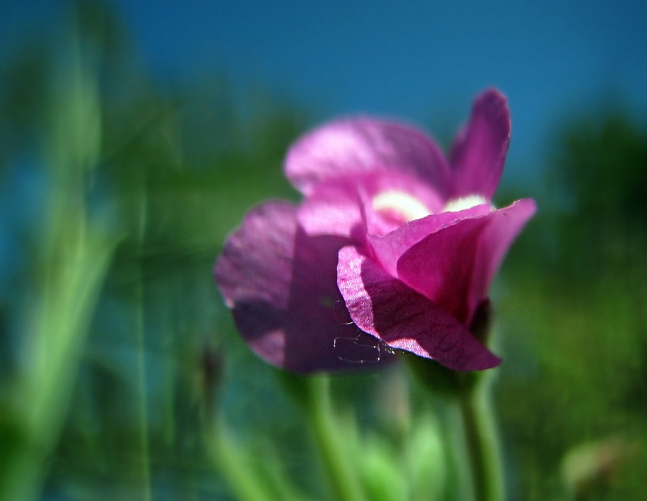 Photograph little flower by Arisa Dina on 500px