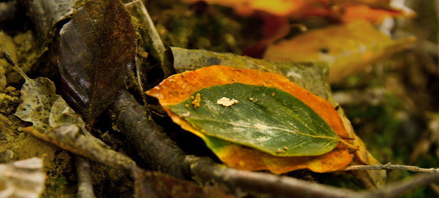 Autumn leaves in the wood