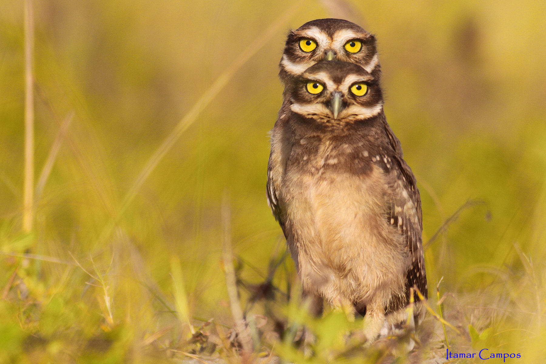 Photograph 4 eyes! by Itamar Campos on 500px