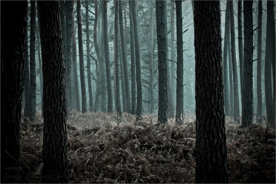 Photograph Mysterious forest by Nicolas Le Boulanger on 500px