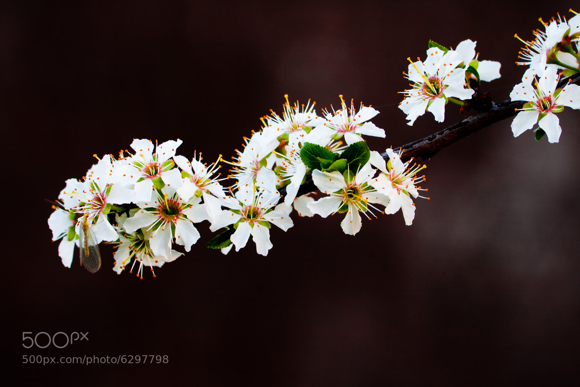 Photograph Spring by Andrea Casati on 500px