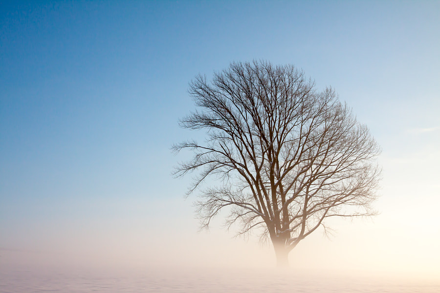 One tree in morning mist... by Hiro Morioka