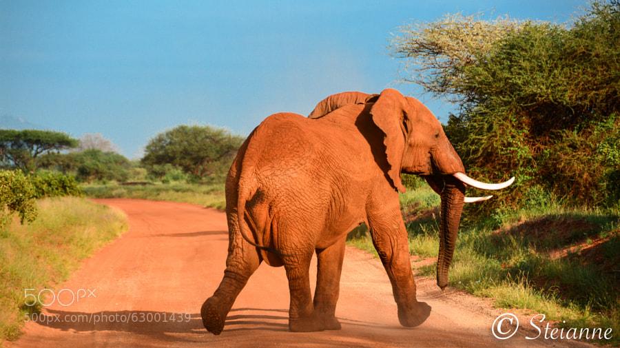 I Love Safari