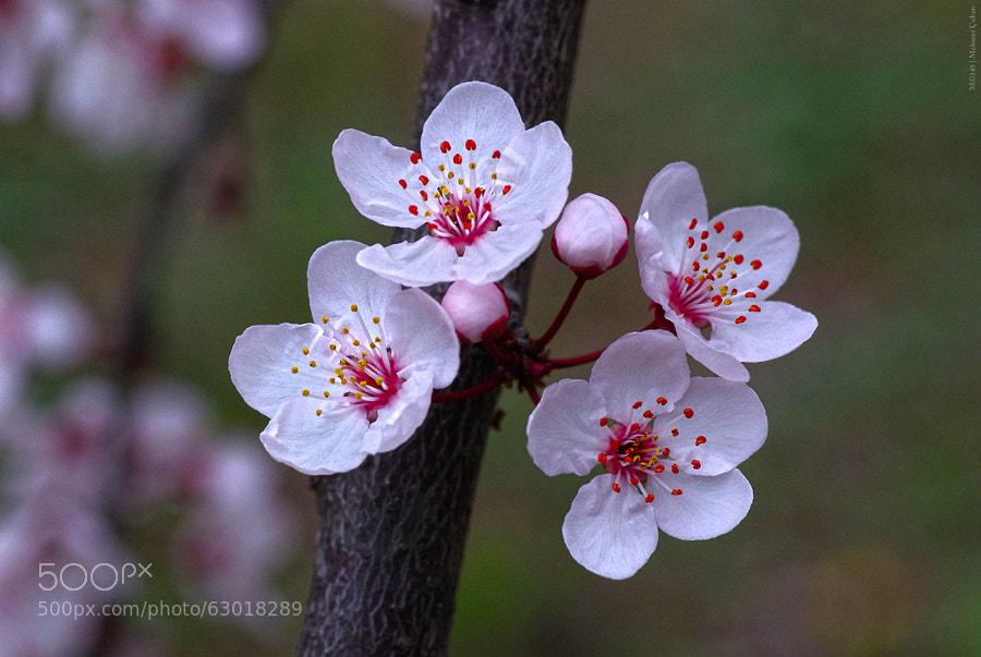 Photograph Spring Life begins by Mehmet Çoban on 500px