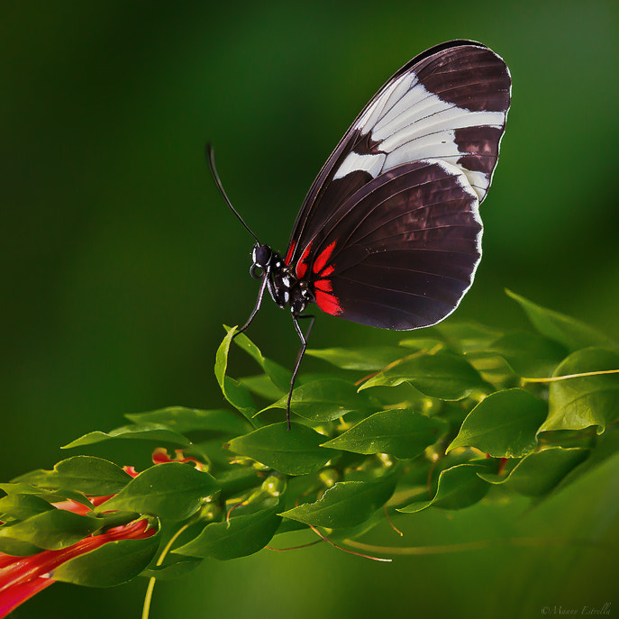 Photograph Ride of the Butterfly by Manny  Estrella on 500px