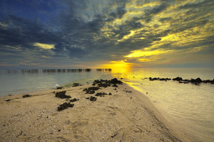 Photograph morning glory by Arie  Sudharisman on 500px