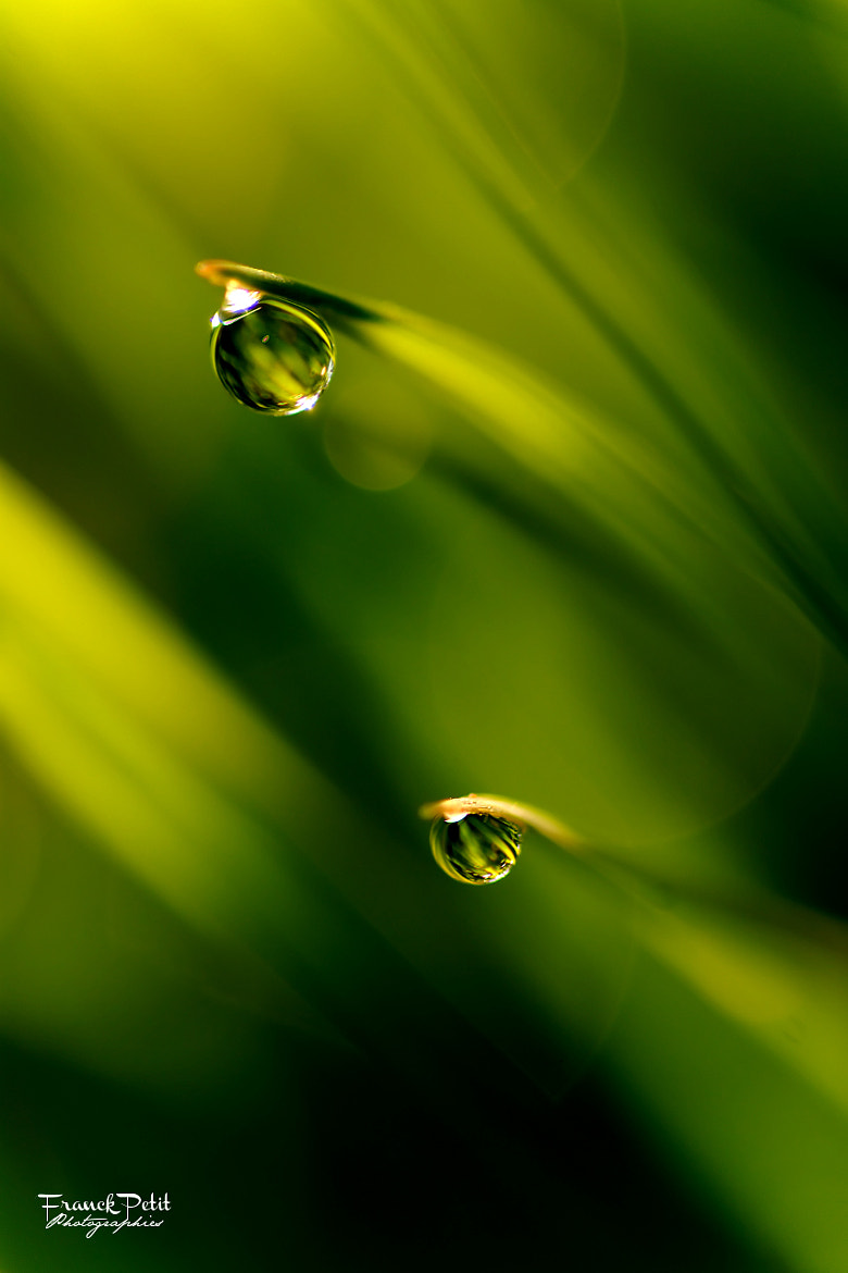 Photograph Green wave by Franck PETIT on 500px