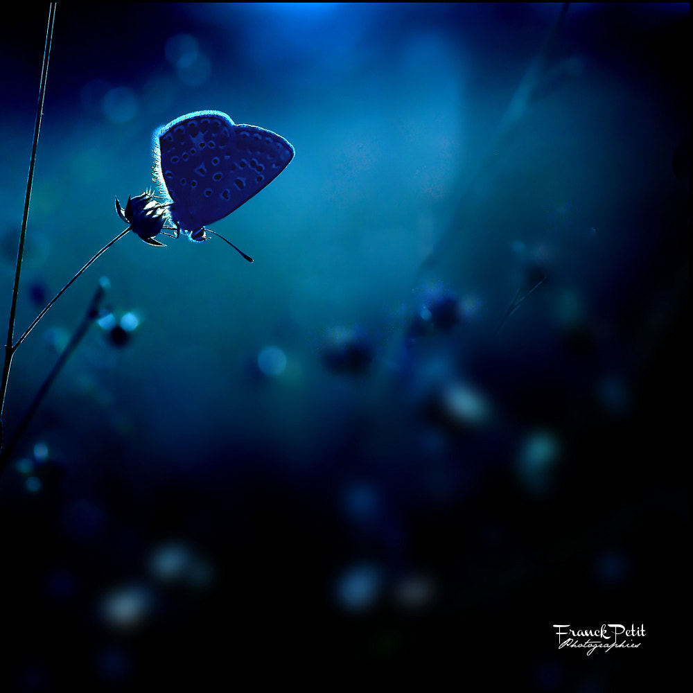 Photograph In a blue dream by Franck PETIT on 500px