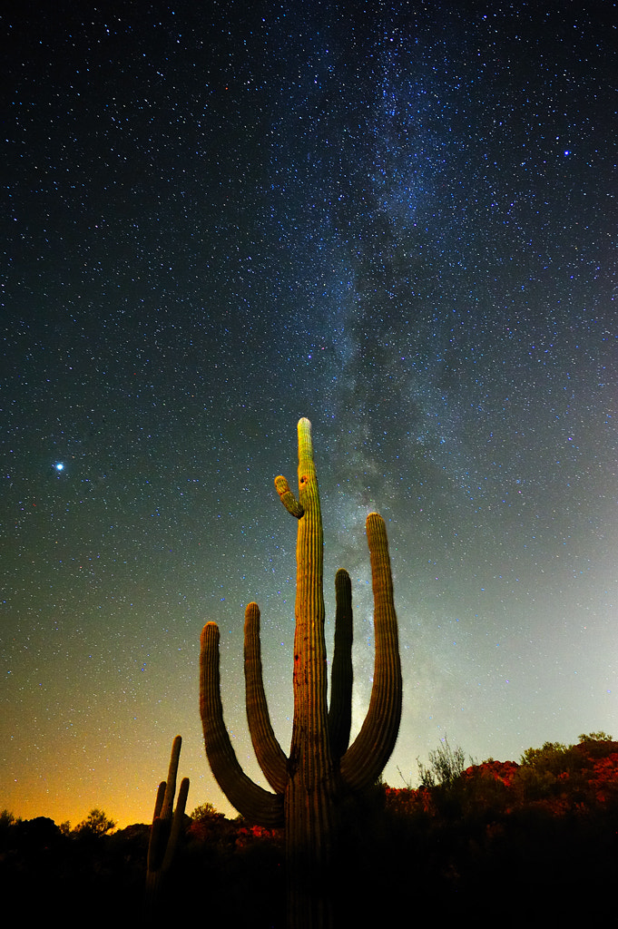 Photograph Saguaro and Stars by Tom Stoncel on 500px