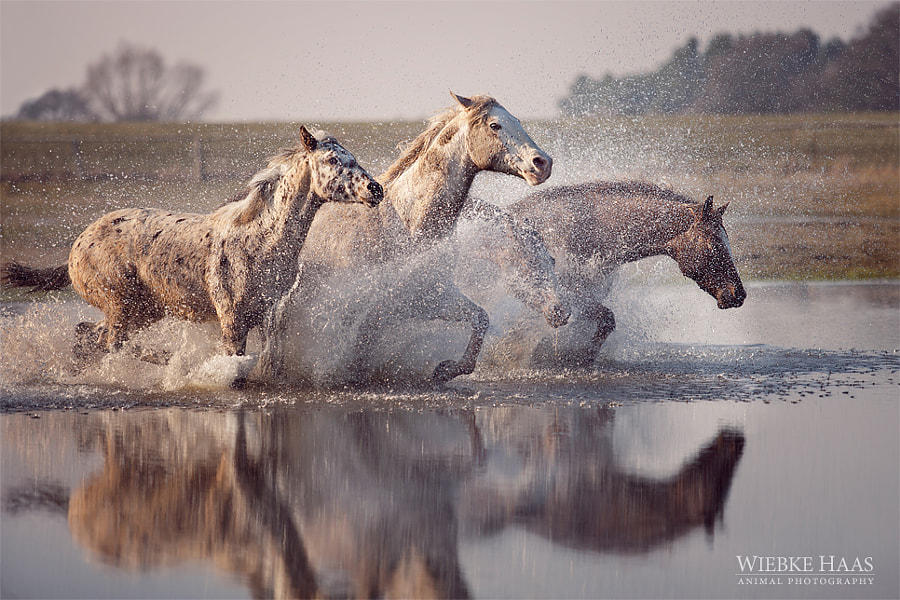 horse photography - First Day Of Spring by Wiebke Haas on 500px.com