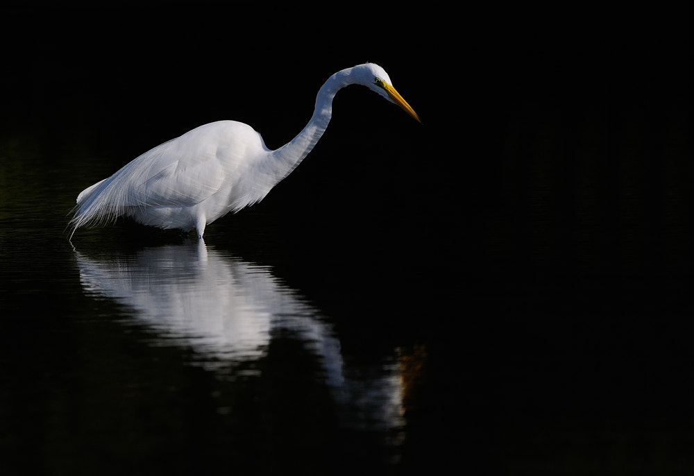 Photograph White on Black by Harry  Eggens on 500px