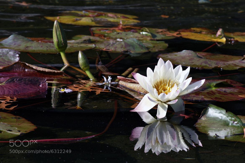 Photograph Still waters by Nadia Prokofieva on 500px