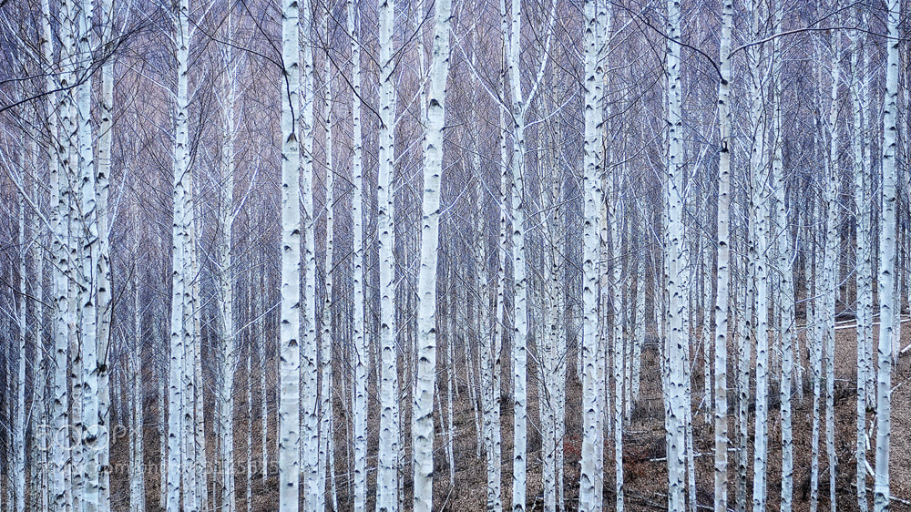 Photograph White wood woods by park seo jin on 500px
