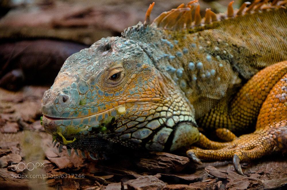 Photograph Reptil en Zacango by Héctor Barrera Carrera on 500px