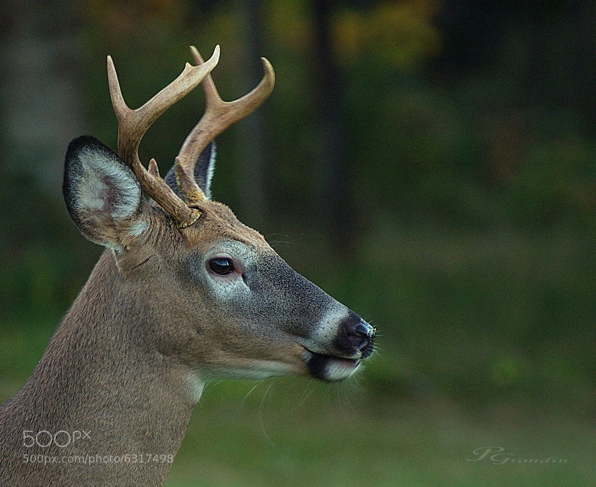 Photograph Little JACK by j-p grondin on 500px