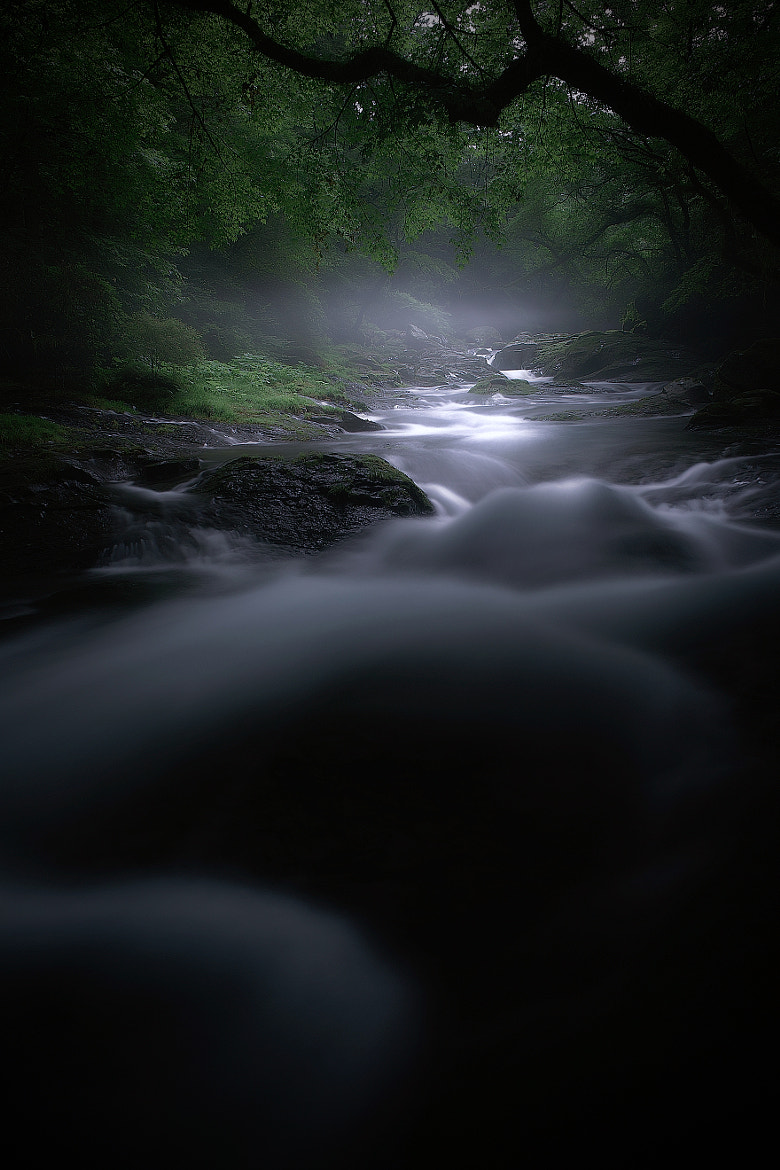Photograph Forest of Spirits by Junya Hasegawa on 500px