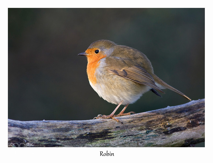 Photograph Round Robin by Lea Roberts on 500px
