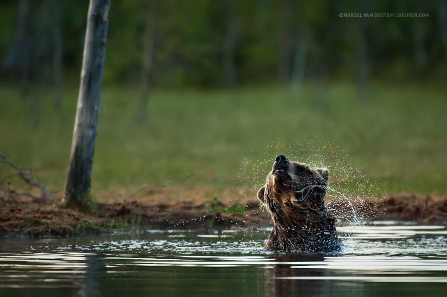 Photograph The Shake by Marsel van Oosten on 500px
