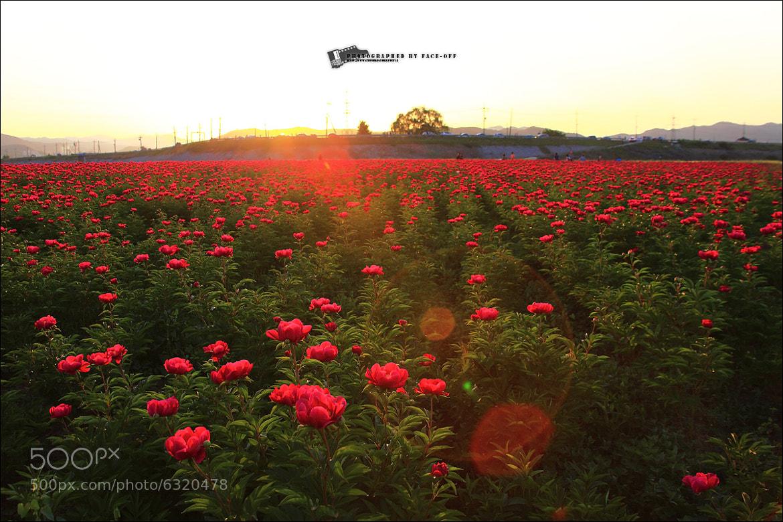 Photograph beautiful korea - red light by lyu choong luyl on 500px