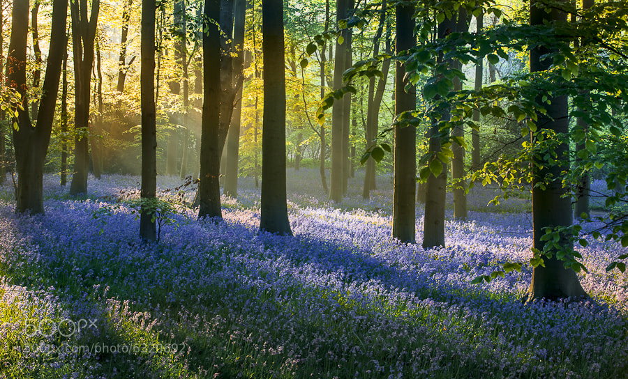 Photograph Spring is here! by Keith Burtonwood on 500px