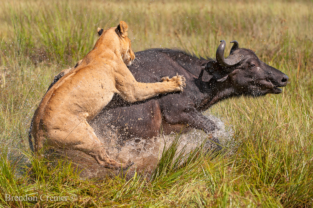 Photograph Relentless Enemies by Brendon Cremer on 500px