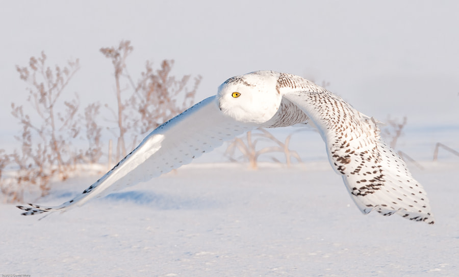 Flying low by David White on 500px.com