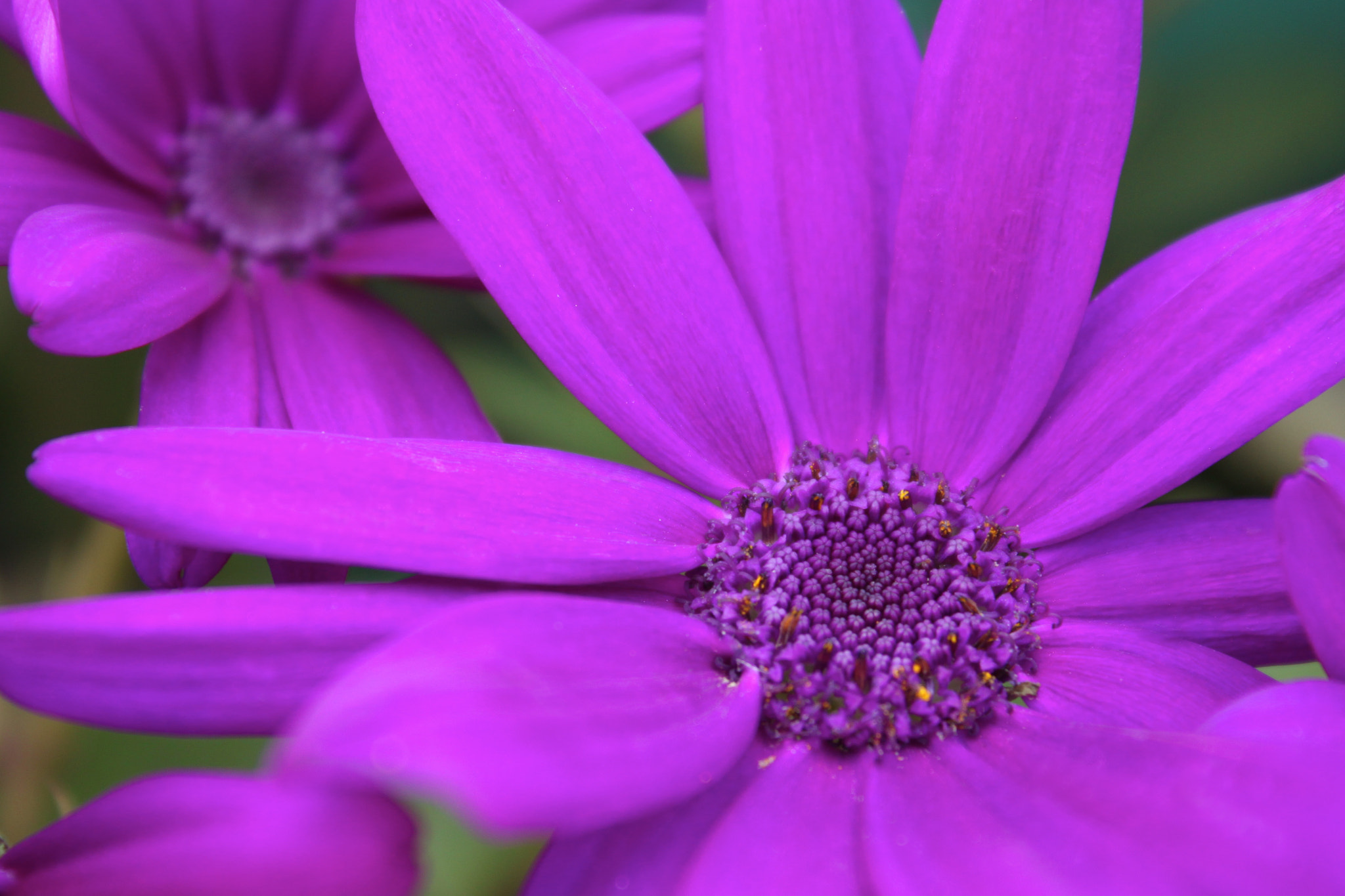 Photograph The Purple Flower by Amir Reza Afsharian on 500px