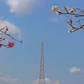 plum blossom & tower