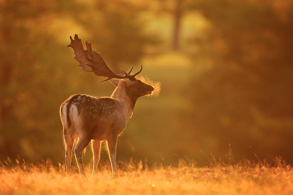 Photograph warm by Mark Bridger on 500px