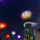 Постер, плакат: OCBC Garden Rhapsody @ Gardens By The Bay