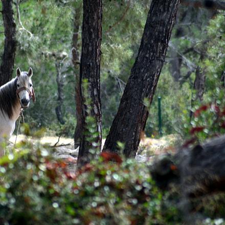White Horse (North Cyprus)