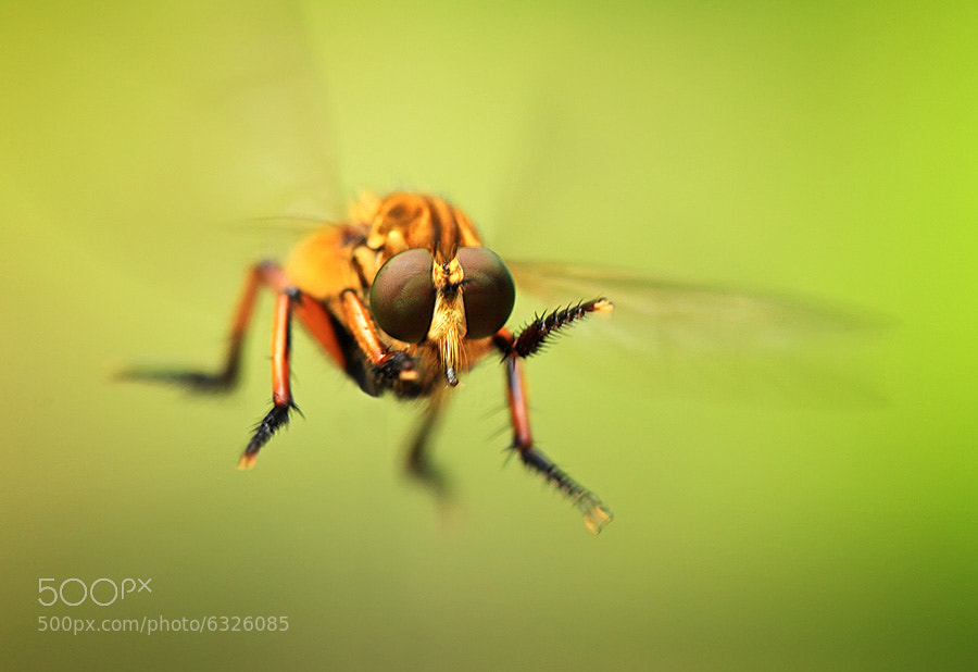 Photograph hovering by shikhei goh on 500px