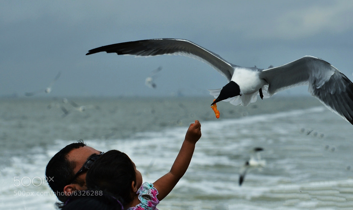 Photograph Seagull Fun by Jeff Clow on 500px