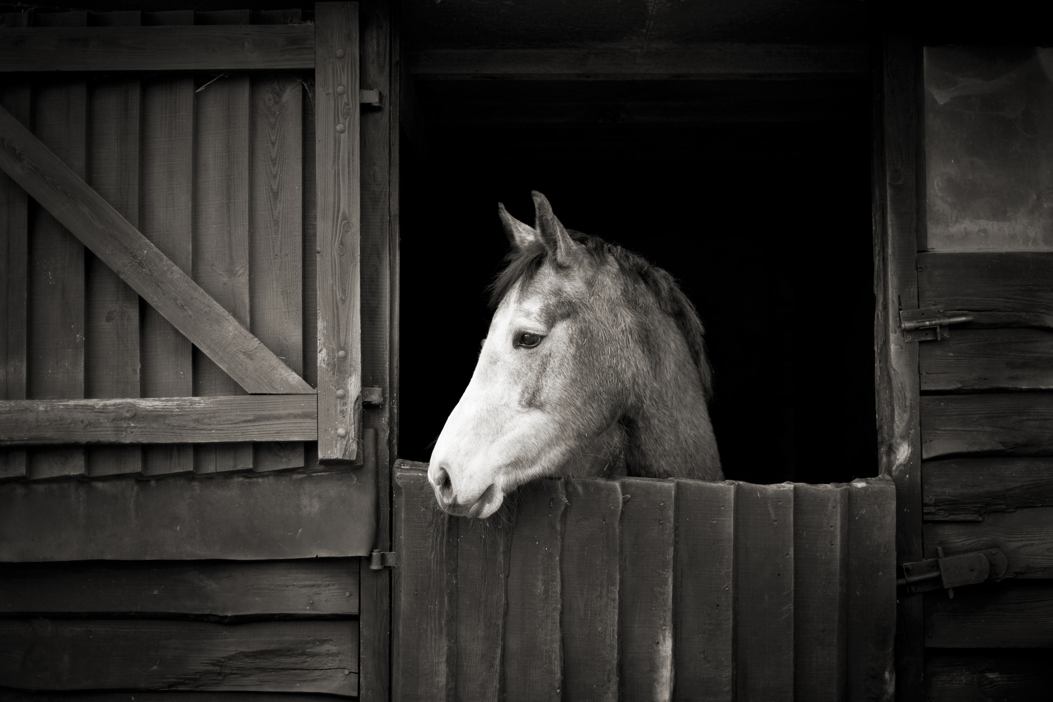 Photograph Listening at the stable door by Paul Indigo on 500px