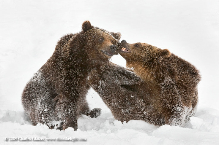 Photograph Ouch! by Charles Glatzer on 500px