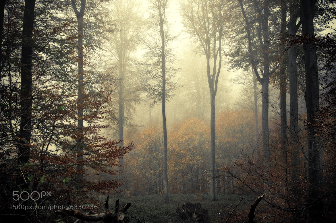 Photograph In the middle of the forest. by Alain Van Deuren on 500px