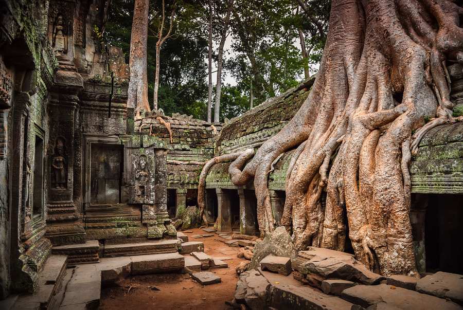 Ta Prohm by Pietro Bevilacqua on 500px.com