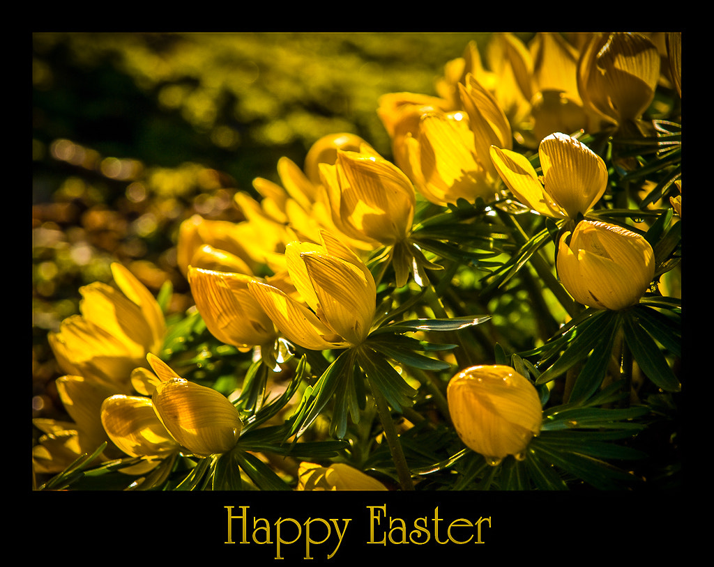 Photograph happy Easter by Jan Wallermark on 500px