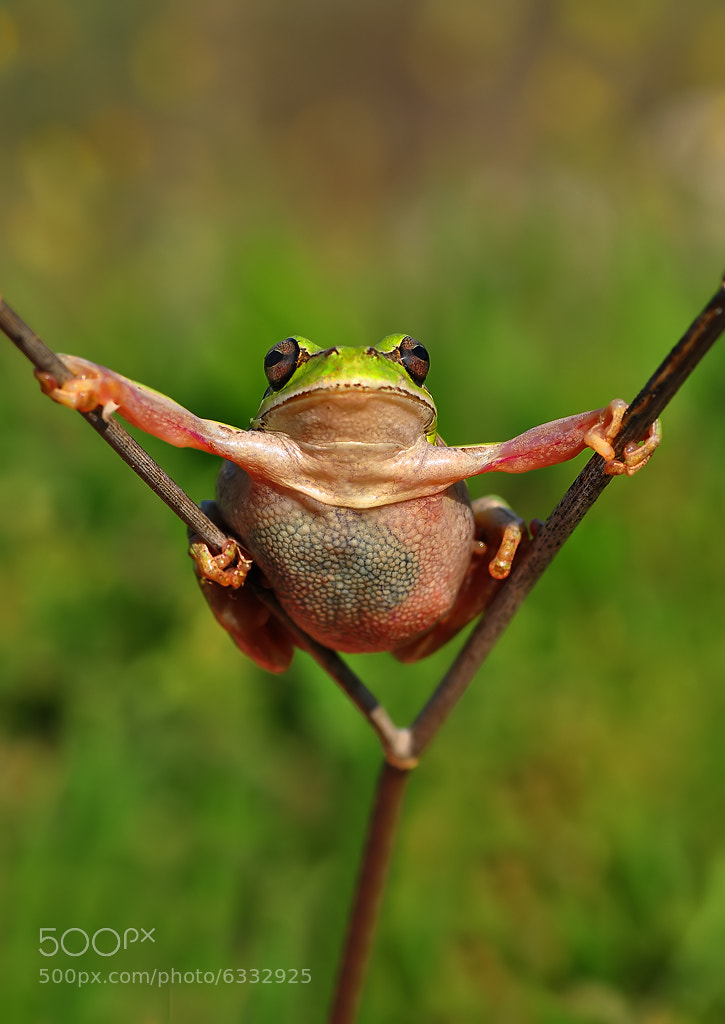 Photograph Super frog by Mustafa Öztürk on 500px
