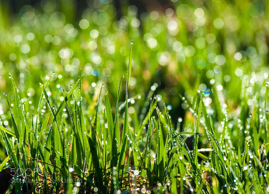 Photograph Bokeh  lawn by Balázs Ferenc on 500px