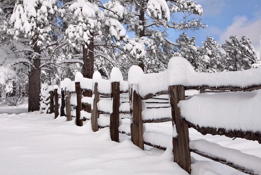 Photograph Snowy Fence by Jill Buschlen on 500px