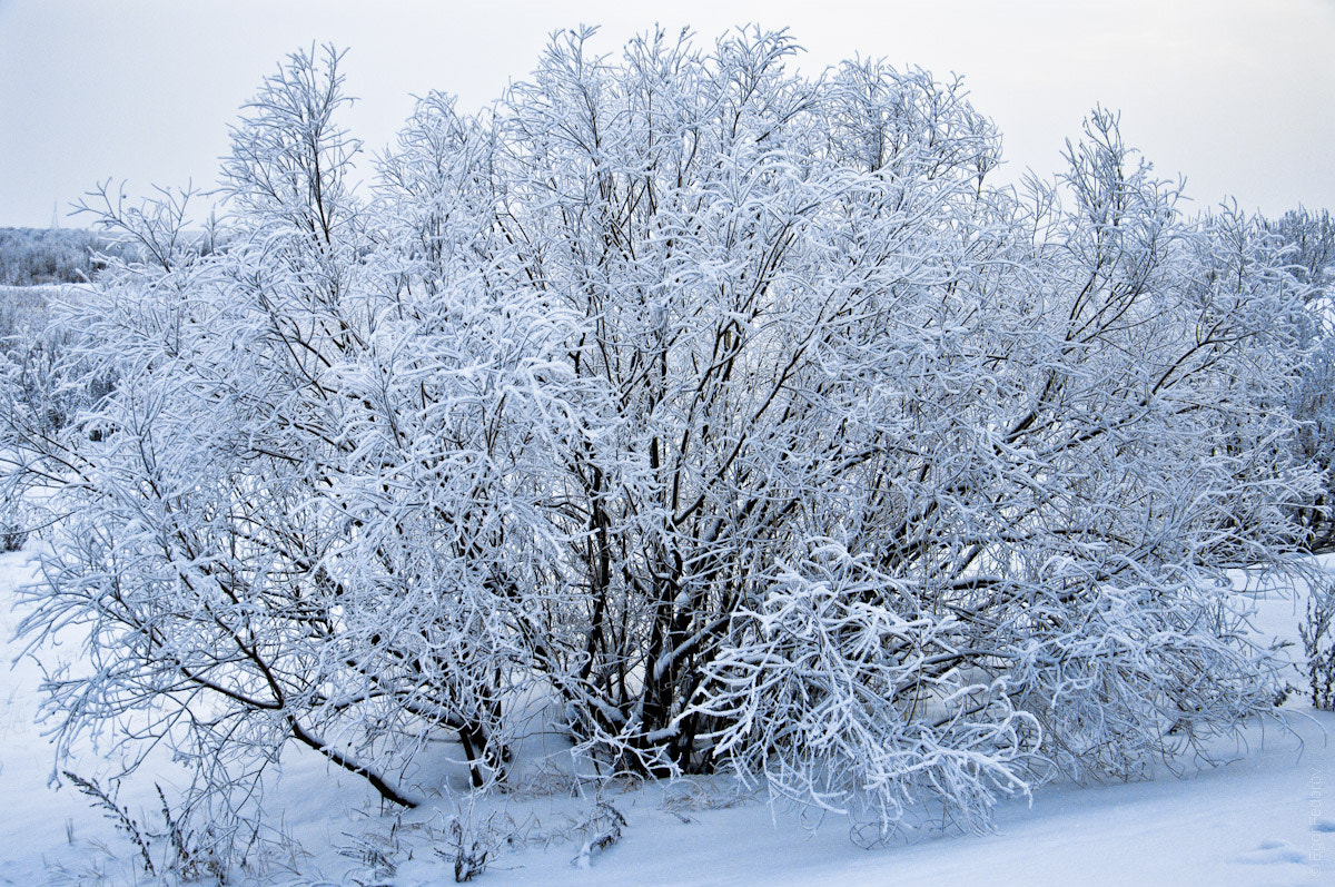 Photograph Winter branches by Egor Fedorov on 500px