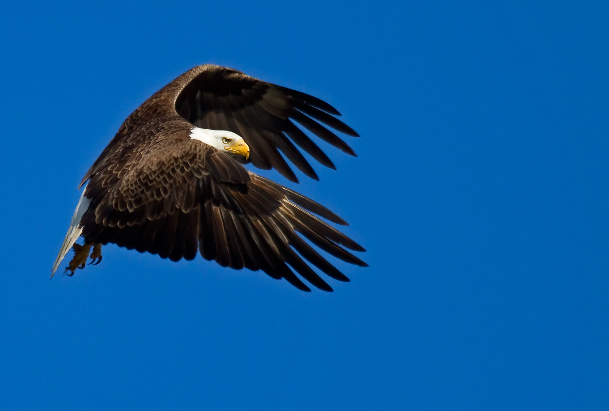 Photograph Powerful Wings by Lorraine Hudgins on 500px