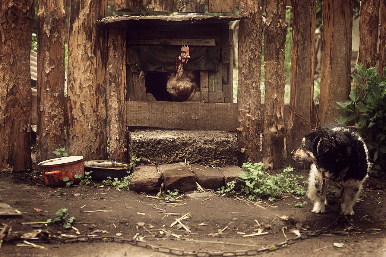 Photograph sad story, as a dog was left without a home:) by Irina  Mastalyarchuk on 500px