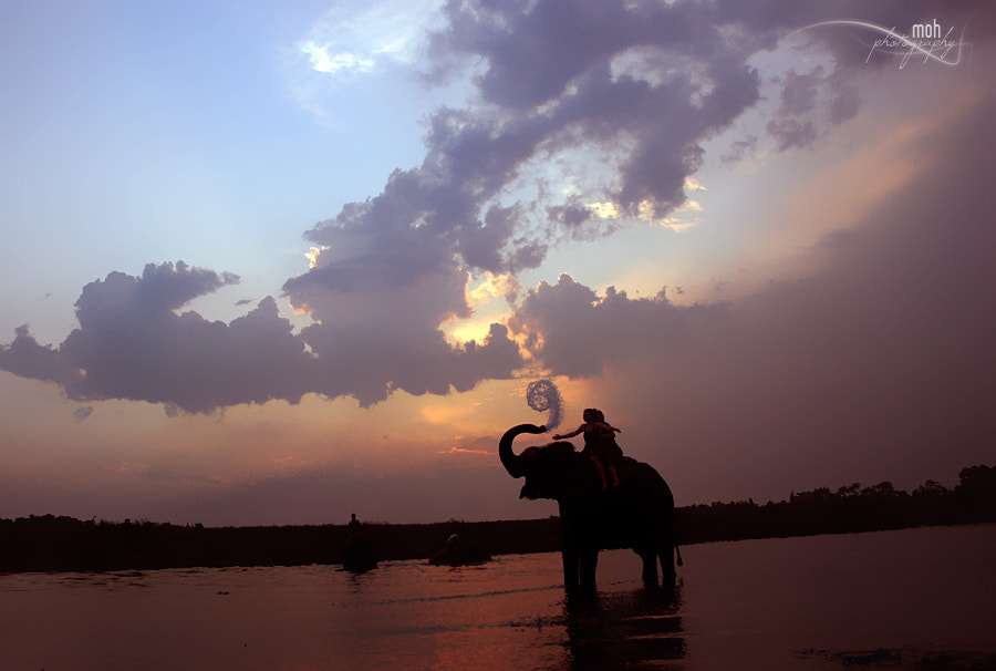 Photograph Elephant Bath by Mohan Duwal on 500px