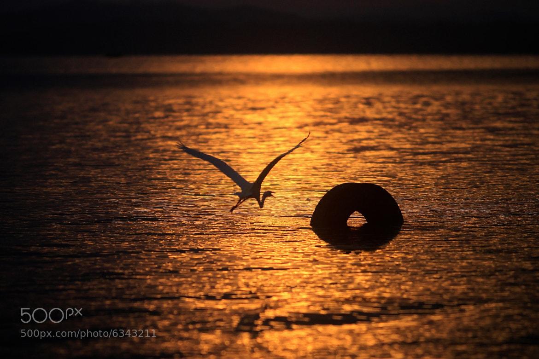 Photograph Taking tour to the sun by Cristobal Garciaferro Rubio on 500px
