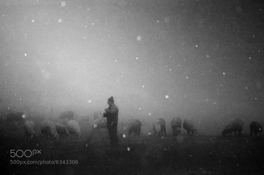Photograph *** by janini (Zhana Topchieva) on 500px